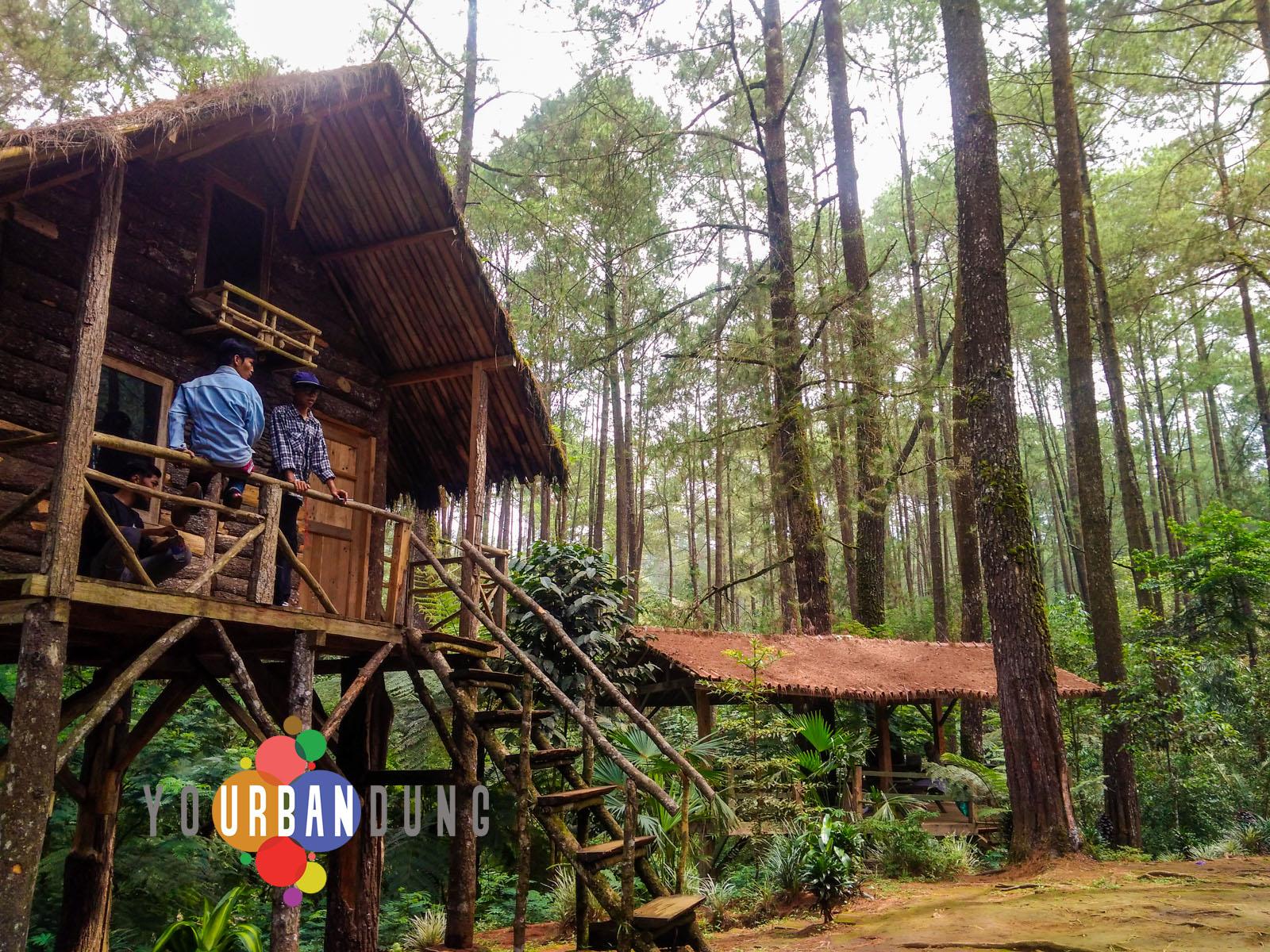 Taman Buru Gunung Masigit Kareumbi Wisata Konservasi Alam