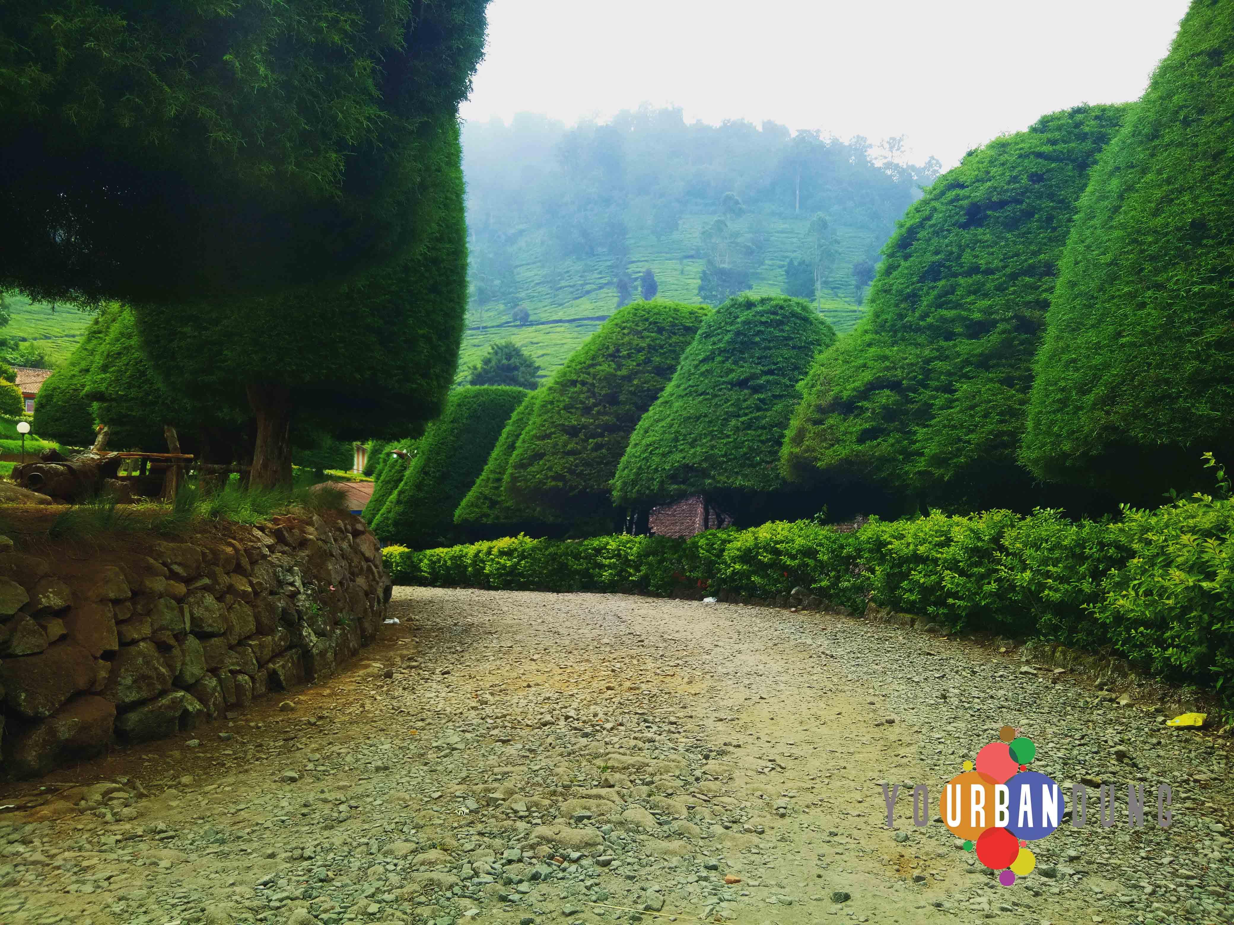 Jalan-jalan ke Ciwidey? Jangan Lupa Mampir ke Bukit Jamur  Your